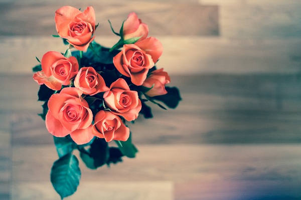 how to grow roses indoors